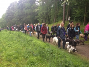 Strut Your Mutt Summer Pack Walk 2015
