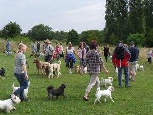 Pack Walk Northampton