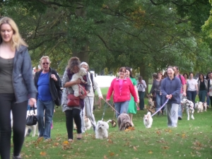 Manchester Dogs Home Pack Walk