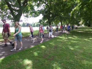 Walk & Train with The Puppies