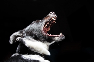 Dog open mouth