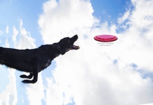 Betsy Flying Disc Dog